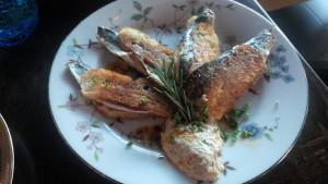 SER sardines